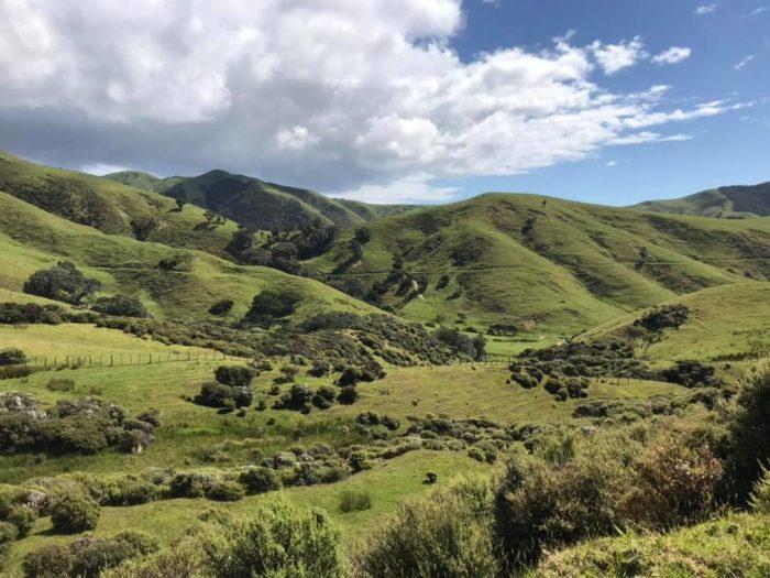 Krajobraz Nowej Zelandii - urlop dr Moniki Górskiej